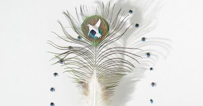 Bird Feather Art by Chris Maynard