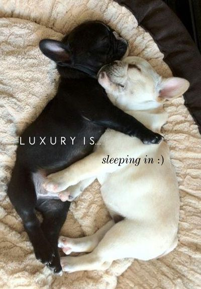 French bulldogs....I just want to squeeze them!! Love!