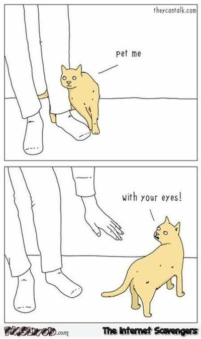 Pet me with your eyes funny cat cartoon #funny #humor #lol #cathumor #funnycartoon #PMSLweb