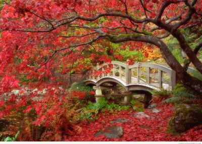 Beautiful Nishinomaru Garden in Japan