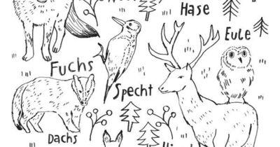 Ausmalbild Oder Abpausen Für Kinder Natur Waldtiere W