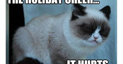 Funny Grumpy Cat Christmas Memes.The 50 Funniest Grumpy Cat Memes Christmas Xmas Ideas