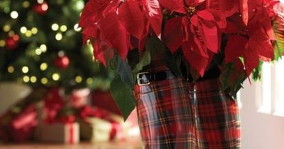 Fresh pick of the month: poinsettia. Always welcome and full of holiday cheer, poinsettias add a traditional touch to your décor inside and out. Available at The Home Depot®, all they need is a little water and lots of sun.