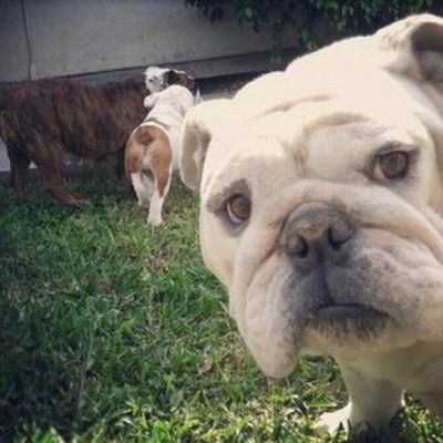 �€œDon't sweat the small stuff, mmkay?�€ | 16 Tips From Bulldogs To Improve Your Day
