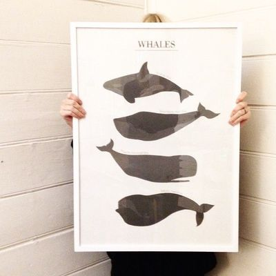 Poster WHALES, 50x70cm | Lagerhaus