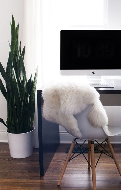 I'm a huge fan of houseplants. If you follow me on Instagram or Pinterest, you probably already know this. I've posted about them in the past (here and here), b