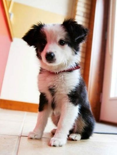 It's a Cuties Puppies pictures hire is find cute puppies and dogs pictures, if you love animals here is Cutest Puppies Altogether To Make You Say Aww. we find best collection around the world and share with friends, if you are pet lover share your p...