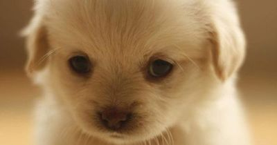 This is how I feel. I feel like a sad, unloved puppy. This is so cute and sad. I just want to hug and cradle this baby and kiss its nose. <3