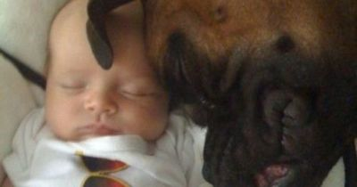 Is there anything cuter than babies with dogs?! Gah! :-)