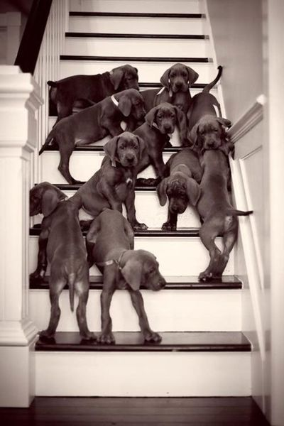 This would totally happen in my house if my husband would leave long enough for me to sneak them in!