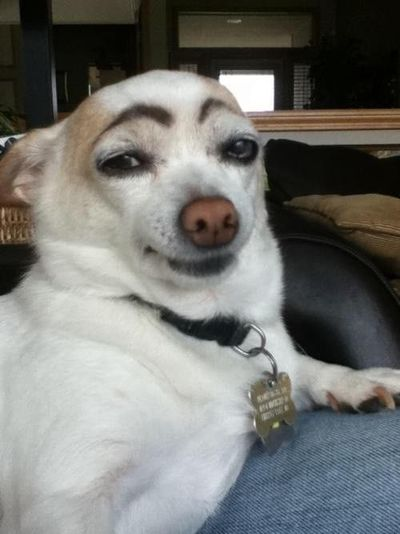 �€œBored? Draw eyebrows on your dog and laugh until his next bath...�€