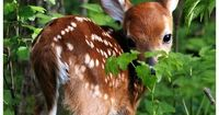 I'm pretty sure there's nothing sweeter than a baby deer.