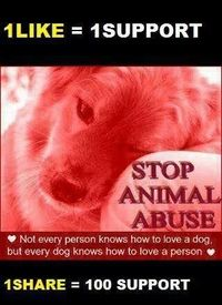 Please, people. Help stop animal abuse. Just keep pinning and sharing as much as possible.... They feel sadness, fear, loneliness and pain just like us. Teach your young children....