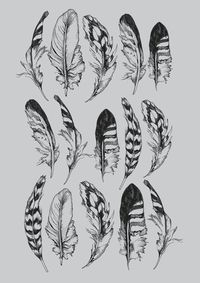 feather print, design illustrations and feather tattoos.