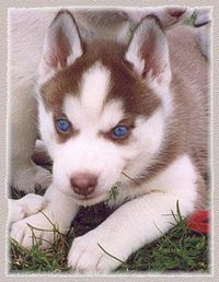 Looks like my Lily when she was a puppy!!