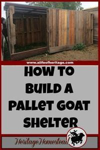 A simple and effective pallet goat shelter that is large enough to hold more than two or three goats. It will keep off the rain, snow and cold!