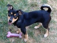 Siesta - Adoption Pending is an adoptable Mountain Dog searching for a forever family near Canton, MI. Use Petfinder to find adoptable pets in your area.