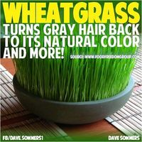 WHEATGRASS GETS RID OF GRAY HAIR - Daily consumption of wheatgrass turns gray hair back to its natural color and more, for total body health. Wheatgrass is made up of an impressive array of nutrients that reinforce and rejuvenate everything from our cells...