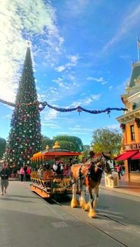 Live from Main Street USA