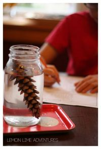 Have you ever wondered why some pinecones are open and some are closed? This student-led pine cone science experiment is perfect for inquiry and discovery.