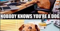 nobody knows you're a dog