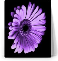 Purple Daisy Canvas $33.00