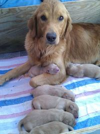 Is it Possible to Look at These Pictures without Going �€œAwwww�€��€? 12 adorable and proud dog mommies that will touch your heart. More