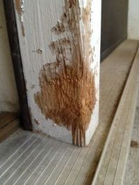 Dog chewing wood door frame