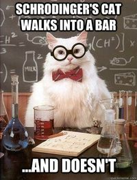 Chemistry Cat: Schrodinger's cat walks into a bar...and doesn't.