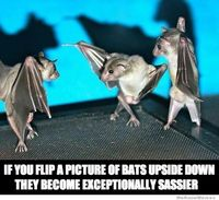 sassy bats! Nobody believes me when I say bats are the cutest things ever!!