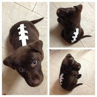 Easy Dog Costume. Cutest Dog costume!