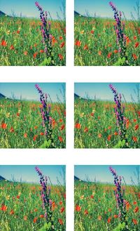 Fabric Panel Flowers in a Field 6 pictures on 1 Panel. Flowers Poly Quilt Fabric Crafts Quilts, Quilters, Patchwork, Needle Point, Patchwork $10.95