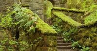 Right on the trail of the Pittock Mansion Hike (Forest Park, Portland, OR)