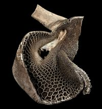 Michael Frank's collaboration with London's Royal Veterinary College saw several formalin-preserved specimens immortalised as stunning images. This image show..