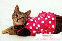 https://www.etsy.com/listing/164538831/adorable-cat-in-a-pink-dress-stock-photo?ref=shop home active
