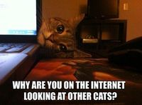 I don't have a cat, but this is funny. Lol cats