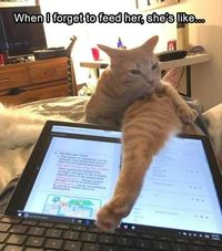 23 Funny Animal Pictures Of The Day �€� Funny Pictures updated daily. Funny Pics, Funny Memes and Funny Animal Pictures!
