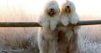 Best picture ever. They look like fluffy snowman bear things!