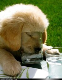 Cyoot Puppy ob teh Day: So Thirsty! - Loldogs - Dogs - Puppy Dog Pictures - I Has A Hotdog!