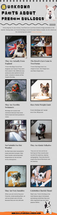 8 Unknown Facts About French Bulldogs