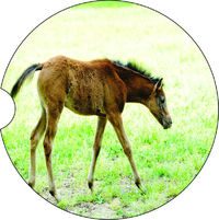 2 Absorbent Car Coasters of Horses #9. Pony, Car Accessories for her, Auto Coaster, Coaster, Cup Holder Coaster, Gift For Her, For Him $14.00