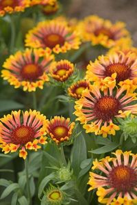 With a little extra care, these perennials will bloom two times (or more!) this summer.