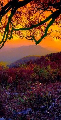 Autumn at Shenandoah National Park in the Blue Ridge Mountains of Virginia.