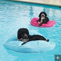 I don't know if my dogs would enjoy this or not, but it's a cute idea! Besides a water-float, can also double as an outdoor pet bed.