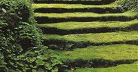 These mossy steps are straight out of a fairy tale, I adore the mystery of them. They appear almost sculptural and become an artform in themselves rather than just steps leading away somewhere. I am still in love with moss.