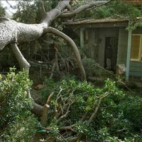 Waveland Tree Removal - Acadian Tree Removal and Stump Services,LLC.jpg