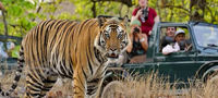 golden triangle tour with ranthambore Anandtravelindia offer you best and unbeatable cost for golden triangle tour package, car rental services, ranthambore tour, fort and palaces, rajasthan with varansi tour and more. Get more exciting discount for ever...
