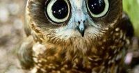 Owl... Cute ... �™� Let's protect our world! Help saving the planet so we can all live to continue seeing these amazing animals! Help protect their home also our home!