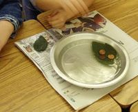 My leaf holds pennies in water. Also surface area out of water, how many pennies does it take to cover a leaf? Lots of leaf learning ideas on this site.