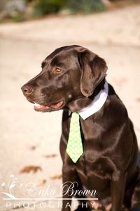 Such a classy gent   Erika Brown Photography. #wedding #pets